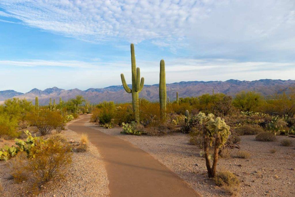 Best Airbnbs in Arizona Featured Image Cactus